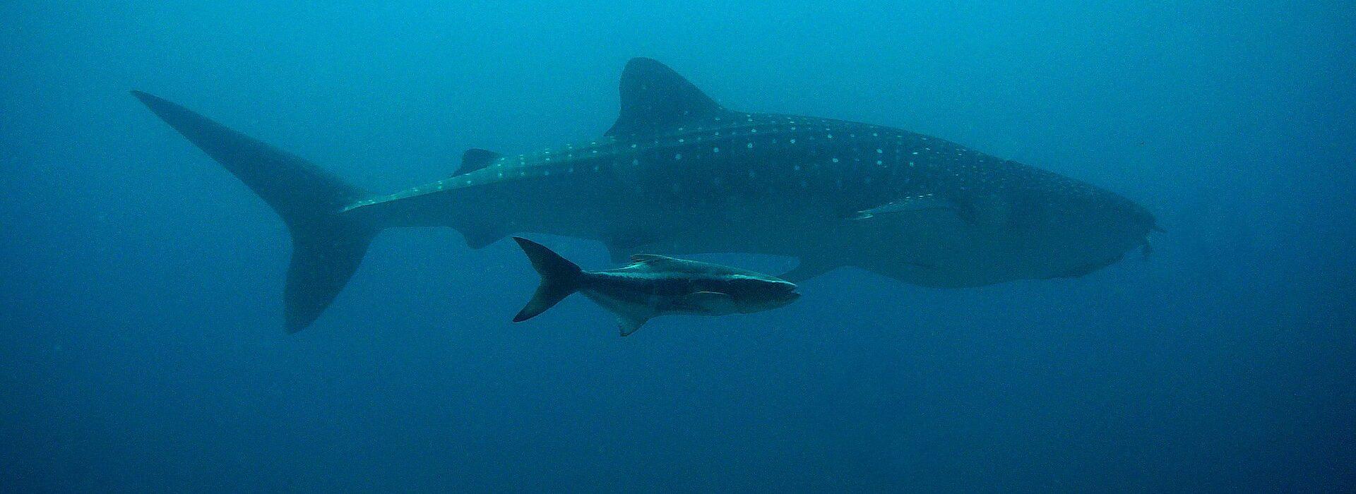 ocean noise whales